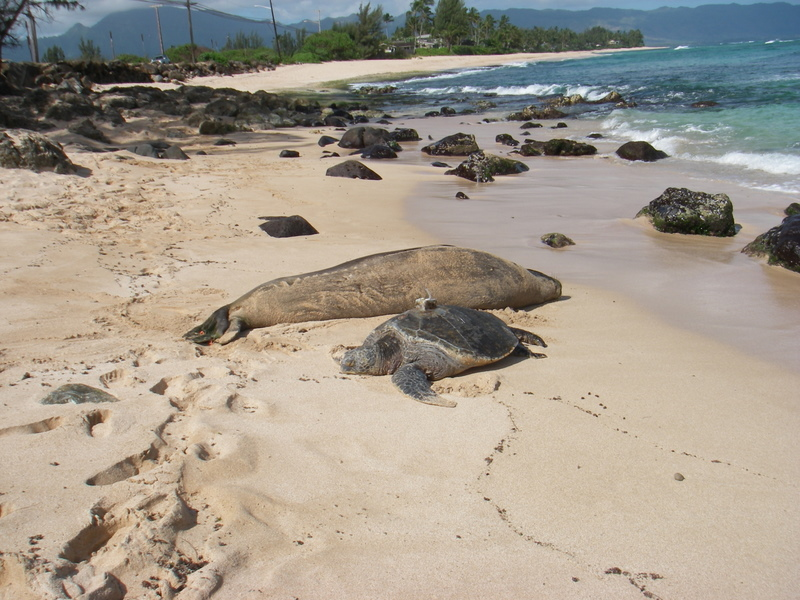 brutus-and-monk-seal.jpg