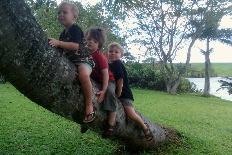 "Cute boys - Ben, Henry and Camden - on a ""palm motorcycle"" while out on a hiker hui outing this morning."