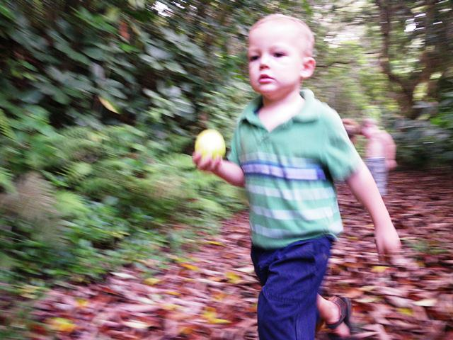 Ben spent most of the hike like this - running out in front with his Meyer lemon, on a mission! He would sniff it, throw it ahead, chase it, pick it up, run for 100 yards and repeat. Every now and then he could be persuaded to stop and smell a white ginger or try a mulberry. We all had a great time in the woods with our guide, Patsy.