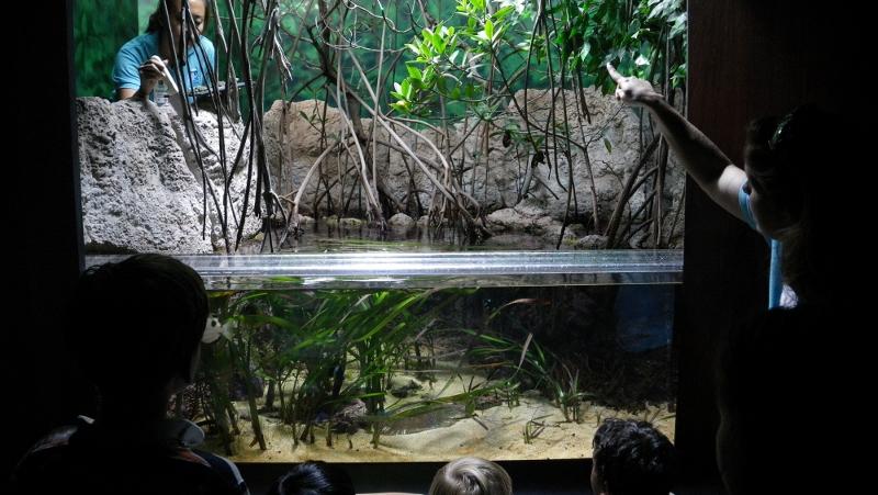 At the Waikiki Aquarium for Marine Munchies - a private tour of the aquarium during feeding time!