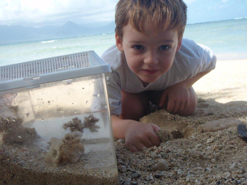 """""""I found SEVEN crabbies!"""" After researching, we made a home for them with sand and ocean water, with a plan to release them at Gramma's beach after an overnight."""