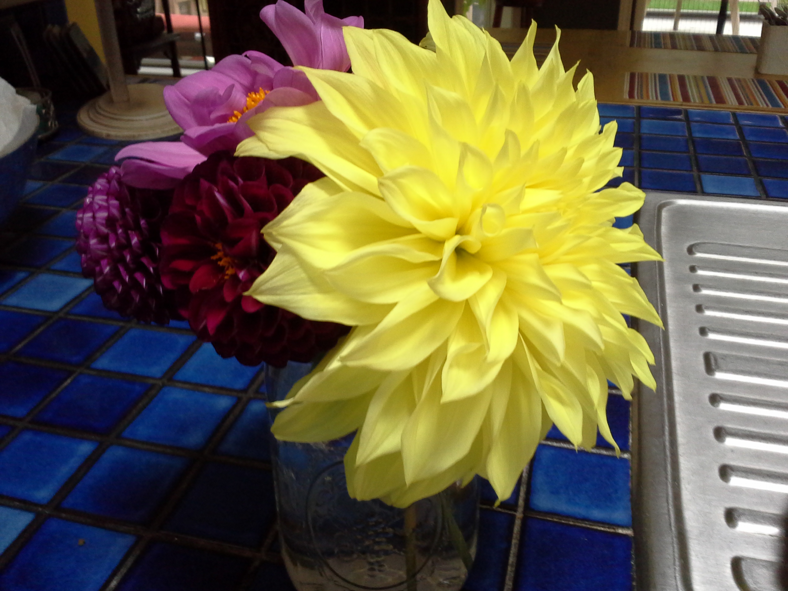 Dahlia bloomed in the garden! Big one!