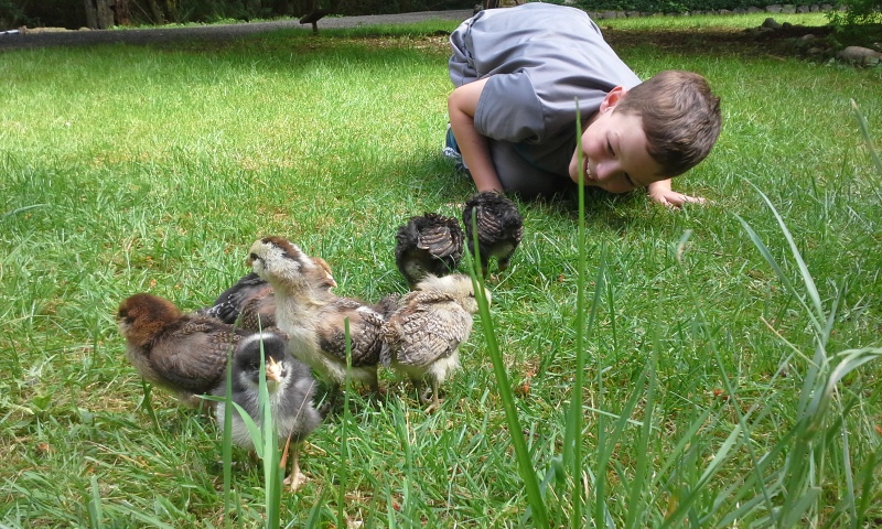 "Ben is a good chicken herder. They get to go on ""hikes"" out in the grass with him!"