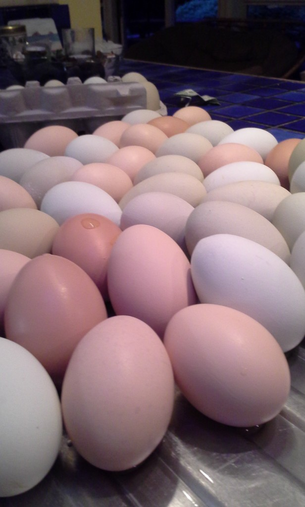 I'm just a little behind packaging up eggs to sell.