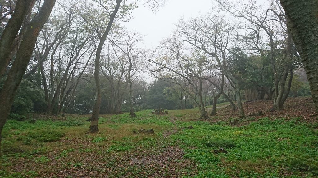 A sakura forest which will be gorgeous in spring. I like it at rest. This is in Kinugasa Park.