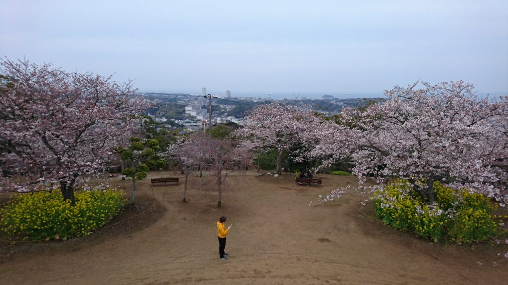 A dusk walk through Kinugasayama Koen to see the cherry blossoms.