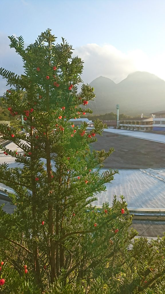 Sunset over the outdoor speed skating rink...and a really neat tree already in Christmas colors.